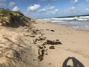 Floreat Beach damage